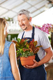 Woman getting advice from florist Stock Image