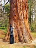 Woman and Giant Tree Royalty Free Stock Photos