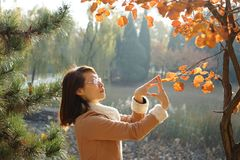 A woman and Ginko tree in fall. A woman and love and A Ginko tree in fall Royalty Free Stock Photography