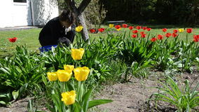 Woman girl care spring tulip flowers in backyard stock footage