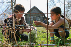 Woman and girl collect medicinal plants near farmhouse, Russia Royalty Free Stock Photos