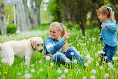 Woman with girl and dog. Beautiful woman with little girl and dog playing outdoors Stock Photos