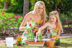 Woman and Girl, Mother & Daughter, Gardening Planting Flowers. Woman and girl, mother and daughter, gardening together planting flowers and tomato plants in the royalty free stock image