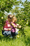 Woman and girl in orchard. Woman and young girl looking at green apples on a tree in an apple orchard Stock Photos