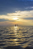 Woman girl walking in the sea at sunset, dawn Stock Photography