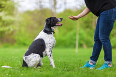 Woman gives a command to her dog. Woman gives a command to her mixed breed dog Royalty Free Stock Image
