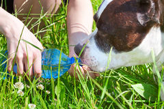 Woman gives to drink her dog Stock Photo