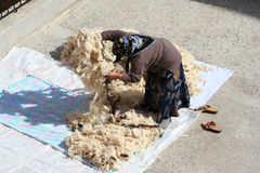 Woman giving wool an airing Stock Images