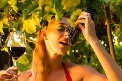 Woman with glass of wine in vineyard. Woman with glass of wine in the vineyard with sunshine, she is the wine queen Royalty Free Stock Photography