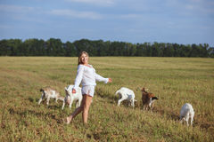 Woman and goats are walking around the field. Royalty Free Stock Image