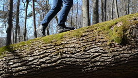 Woman goes an old fallen tree trunk in the forest. Woman with blue jeans spring morning goes an old fallen tree trunk in the forest stock footage