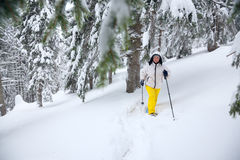 Woman goes on snowshoes through the coniferous forest Royalty Free Stock Photos