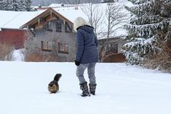 A woman goes for a walk with her Norwegian Forest Cat in winter Stock Image
