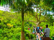 Woman going on a jungle zipline adventure Royalty Free Stock Photography