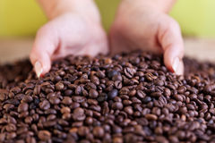 Woman grabbing a handful of roasted coffee beans Royalty Free Stock Photo