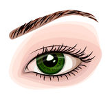 Woman green beautiful eye. Vector isolated illustration of woman beautiful green eye Stock Images