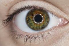 Woman green eye closeup Stock Images