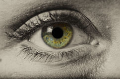 Woman green eye isolated macro Stock Image