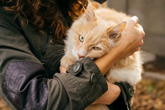 Woman in a green jacket holds a fluffy red cat outdoors in autum Royalty Free Stock Photos