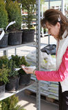 Woman in greenhouse. Attractive female shopping for house plant royalty free stock images