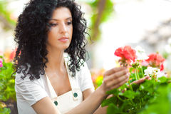 Woman in a Greenhouse Stock Images