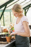 Woman in greenhouse raking soil in pot smiling Stock Image