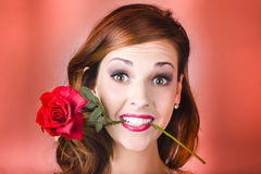 Woman gripping red rose between her teeth. Studio portrait of an attractive brunette woman smiling to the camera whilst gripping a red rose between her teeth Stock Image
