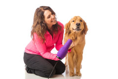 Woman grooming dog with a blowdryer Stock Photography