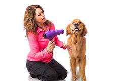 Woman grooming dog with a blowdryer Stock Images