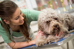 Woman and grooming dog stock photos