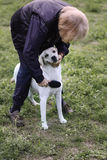 Woman grooming her Labrador retriever in park Royalty Free Stock Image