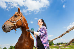 Woman grooming horse against blue sky background Stock Photo