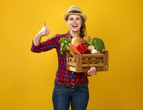 Woman grower with box of fresh vegetables showing thumbs up. Healthy food to your table. Portrait of smiling young woman grower in checkered shirt on yellow Royalty Free Stock Images