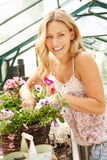 Woman Growing Plants In Greenhouse Stock Images