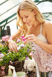 Woman Growing Plants In Greenhouse Royalty Free Stock Photos