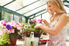 Woman Growing Plants In Greenhouse Stock Photography