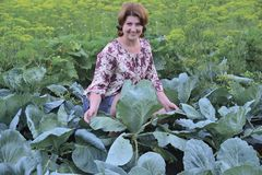 A woman grows cabbage in the garden. Woman sitting on a cabbage field in summer royalty free stock photos