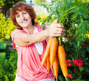 Woman grows harvest in the garden Stock Photos