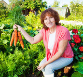 Woman grows harvest in the garden Stock Photo