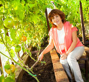 Woman grows harvest in the hothouse Royalty Free Stock Image
