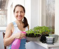 Woman  grows vegetables Royalty Free Stock Photos
