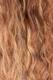 The woman hair royalty free stock photo