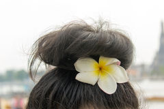 Woman hair with white flower. Photo royalty free stock image