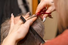 Woman hairdresser cuts a man with a receding hairline with scissors stock image