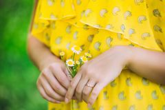Woman hand with a camomile. stock images