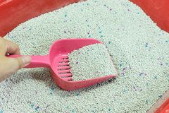Woman hand is cleaning of cat litter box with pink scoop. royalty free stock photo