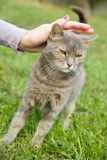 Woman hand cuddling gray cat outside Stock Photo