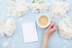 Woman hand with cup of coffee, open notebook and beautiful white peony flowers on pastel table. Cozy breakfast. Flat lay royalty free stock photography