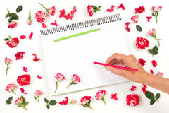 Woman hand drawing on spiral notebook with colored pencils and rose frame. Top view stock photos