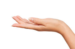 Woman hand Stock Photography